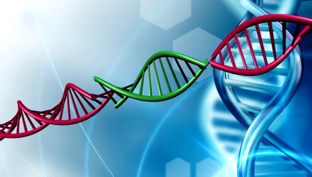 Científicos estadounidenses han conseguido editar embriones, cortando y pegando su ADN