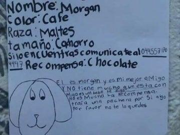 Dibujo de Morgan, el perro perdido