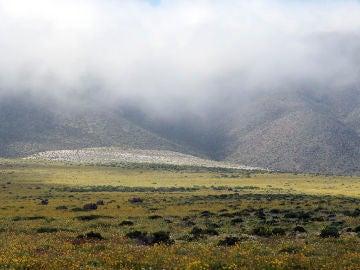 Imagen del Desierto de Atacama con flores