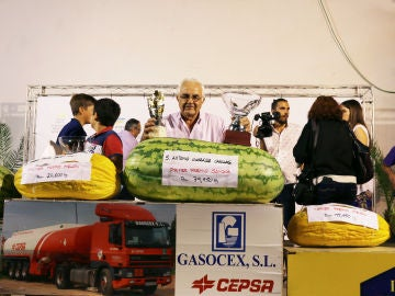Sandía ganadora del tradicional concurso de San Bartolo, en la localidad pacense de Villanueva de la Serena
