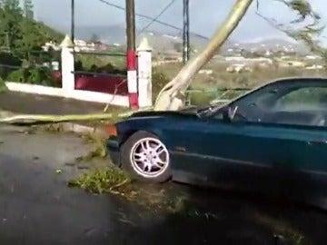 Los seguros pueden afrontar las pérdidas por un robo o provocadas por tormentas
