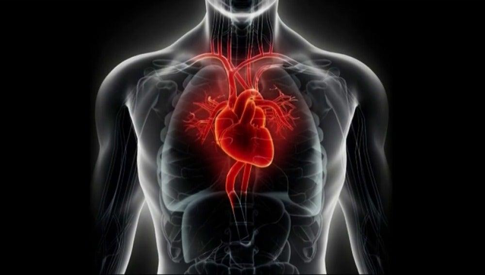 ANTENA 3 TV | ¿Por qué el corazón está en el lado izquierdo del ...