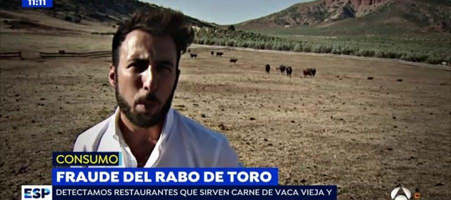 Antena 3 tv carne de canguro o rabo de toro for Antena 3 espejo publico hoy