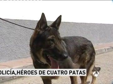 El perro que colaboró en la seguridad de la coronación del Rey, se jubila