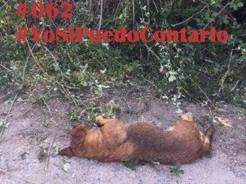Matan a un perro de un tiro en la cabeza en Ávila