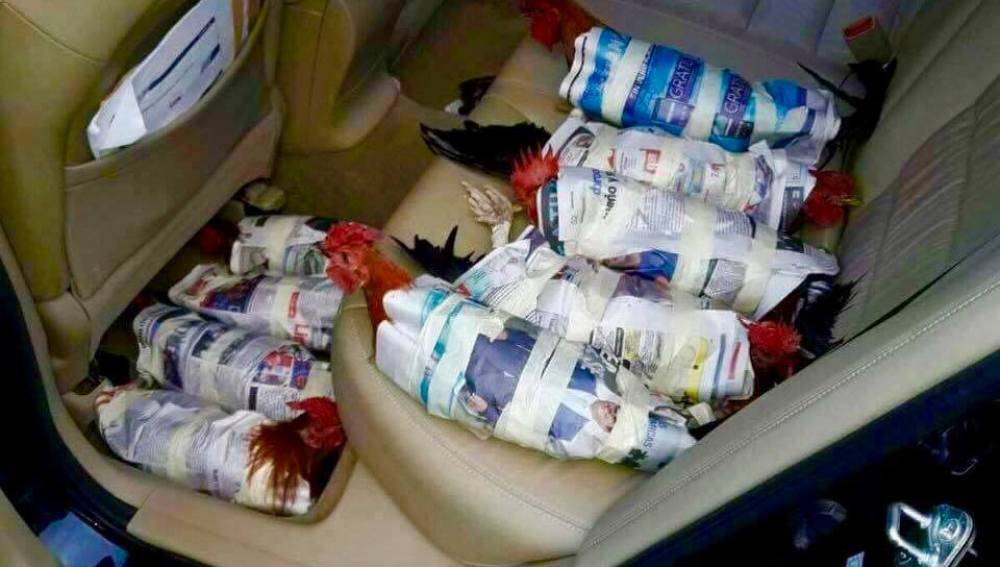 Pollos envueltos en papel de periódico