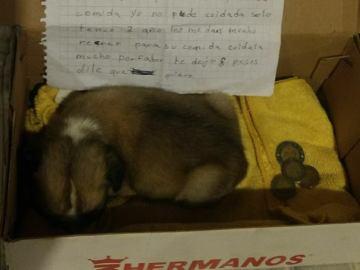 La conmovedora carta de una niña que es obligada a abandonar a su perro