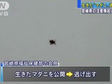 Captura del vídeo que muestra a la garrapata que escapó