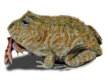 Representación de la rana del Infierno comiendo un dinosaurio pequeño