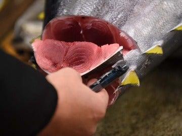 Un mayorista inspecciona un atún fresco.