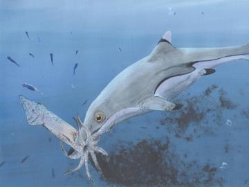 Ictiosaurio devorando un calamar
