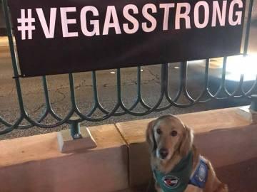 Uno de los perros de ayuda en Las Vegas
