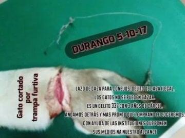 Foto del gato herido en Durango