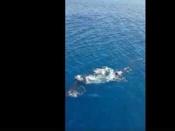 Ballena varada en Fuerteventura