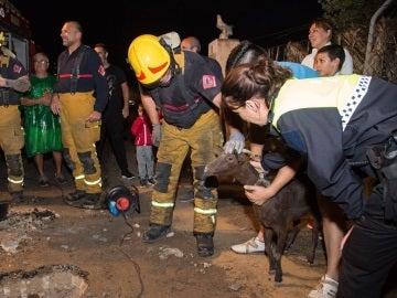La cabra, minutos después del rescate