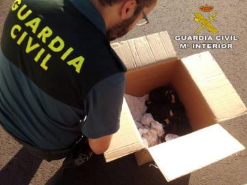 Cachorros rescatados por la Guardia Civil