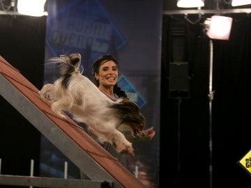 Pilar Rubio supera un nuevo reto en 'El Hormiguero 3.0' con la ayuda de la perrita Audrey