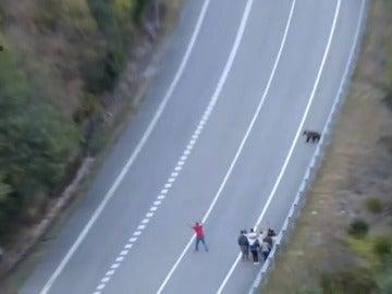 Un grupo de turistas acosa a un oso en la montaña leonesa