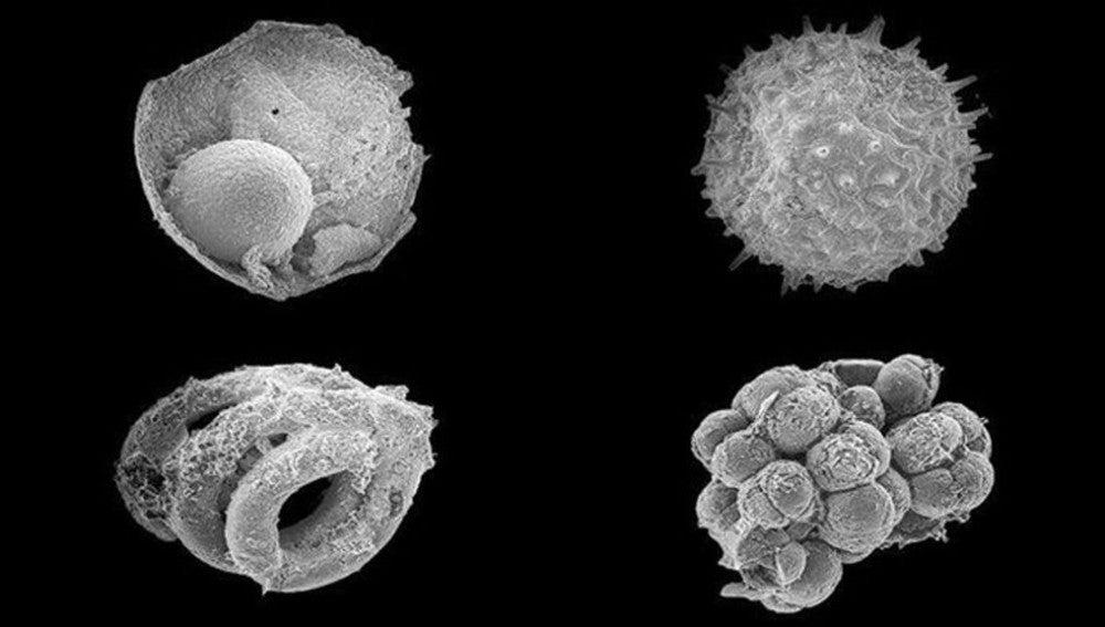 Microfósiles encontrados en Mongolia arrojan luz sobre los primeros animales en la Tierra