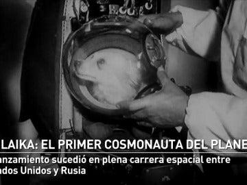 60 años desde el lanzamiento de la perra Laika al espacio