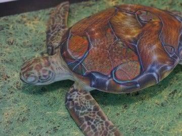 Imagen de la tortuga empleada por los investigadores del MIT