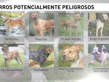 Los perros peligrosos deben llevar bozal y sin correa extensible
