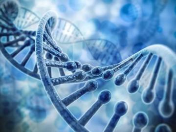 Un nuevo metodo acelera el mapeo de genes en la materia oscura del ADN