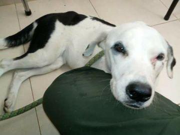 Nube Viajera, la perrita que murió de pena tras ser abandonada