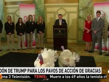 Llegan a Washington y se alojan en un lujoso hotel los dos pavos que indultará Trump por la fiesta de Acción de Gracias