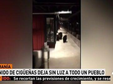 Policías descubren a tres osos intentando entrar en un centro comercial en Tahoe, California