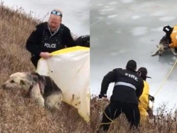 Los bomberos rescatan a un perro de un lago helado