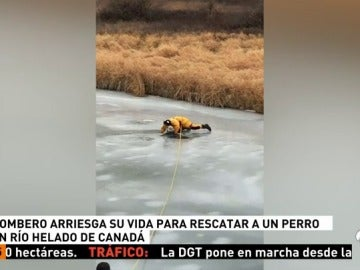 RESCATE_PERRO
