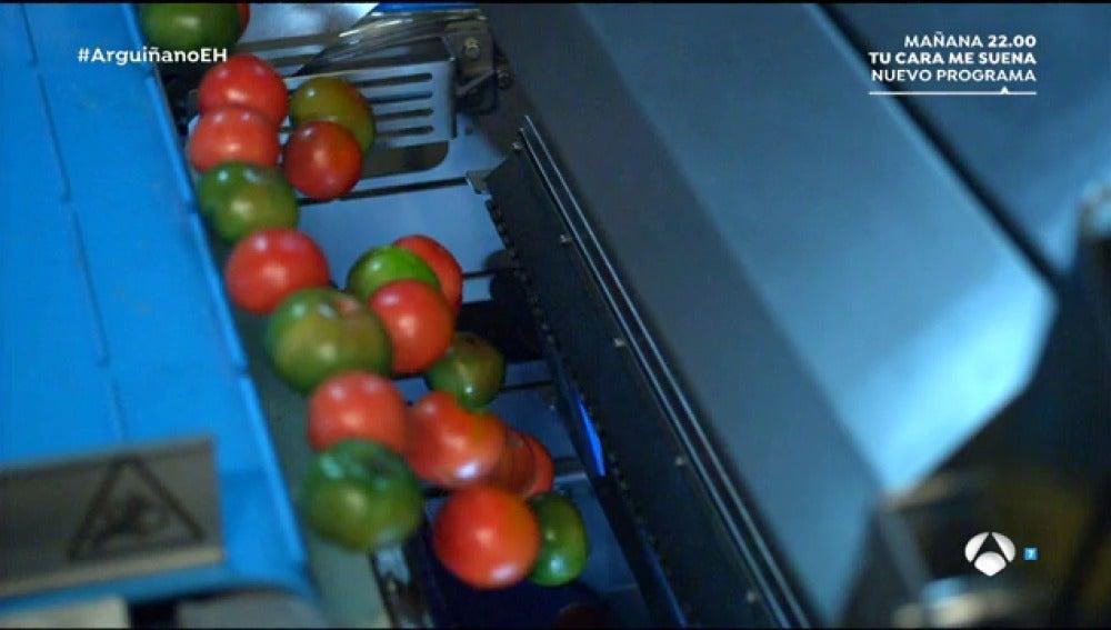 La primera máquina capaz de separar tomates según su color