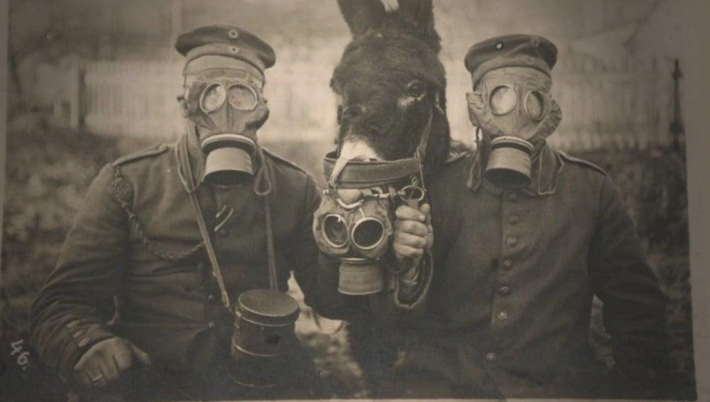 Los horrores y peligros de una guerra química