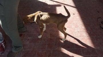 Uno de los dos perros encerrados