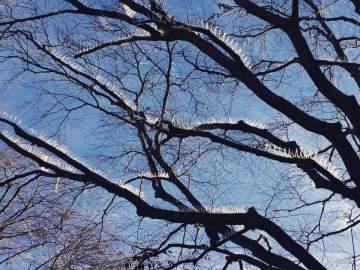 Pinchos en los árboles