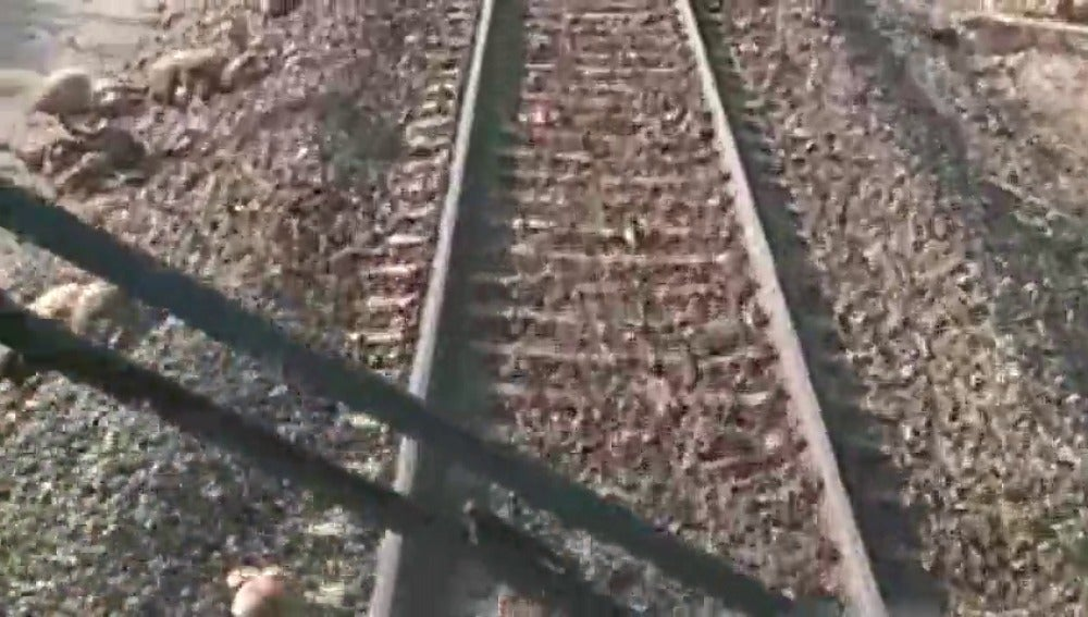 Un tren atropella a un rebaño de ovejas en Tarragona