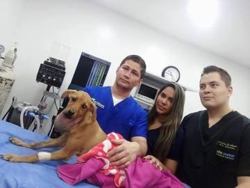 Lupita en el centro veterinario donde ha sido operada
