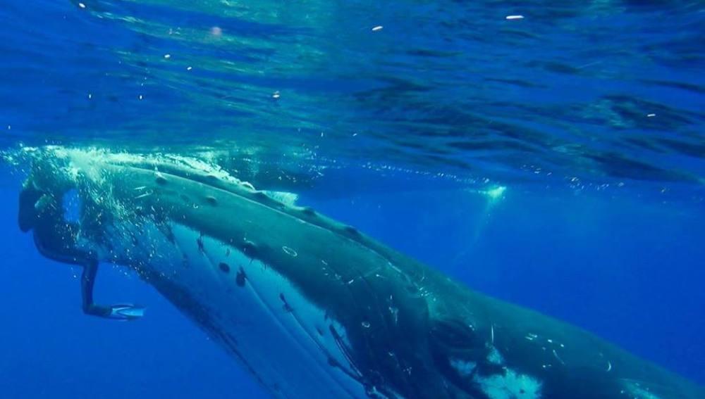 El momento en el que una ballena salva a una buceadora