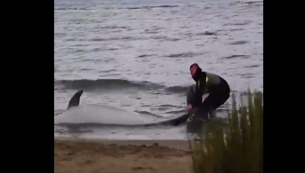 El mosso salvando al delfín