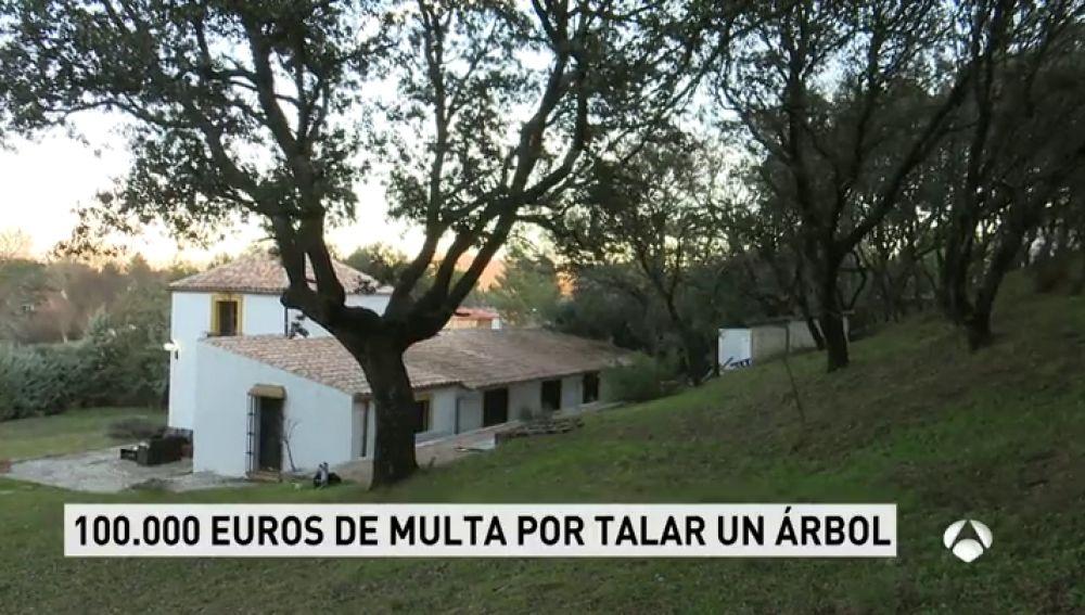 TALA_ARBOLES