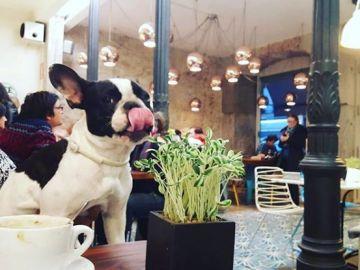Un perro en un restaurante