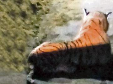 Tigre de peluche en una granja británica