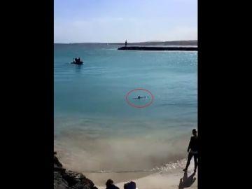Un delfín en la zona de Playa Chica, en Fuerteventura