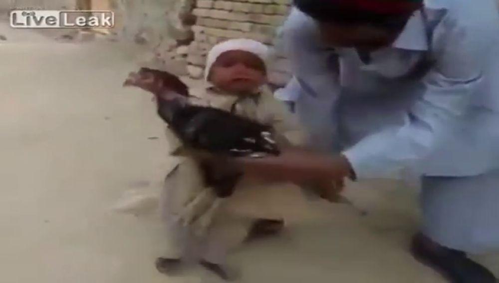 Un niño evita con su llanto que el padre sacrifique a un pavo