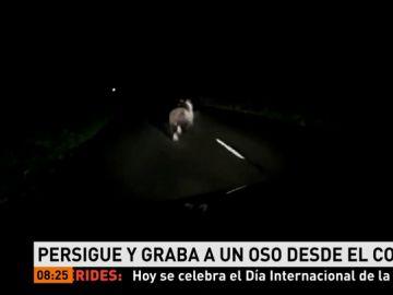 Persigue a un oso con el coche en Asturias