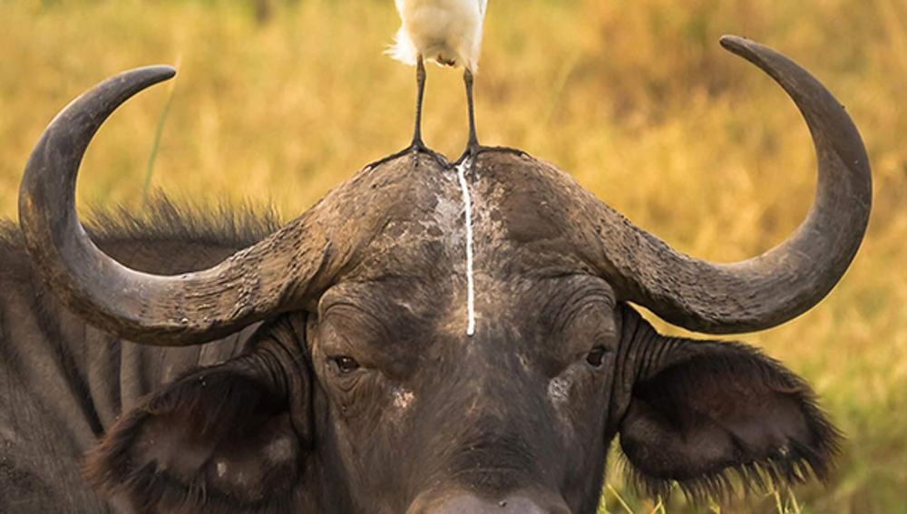 funny-animal-fails-20-586b6a4a17bce__605.jpg