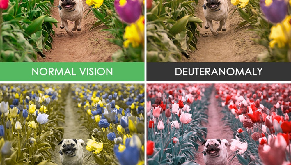different-types-color-blindness-photos-41.jpg