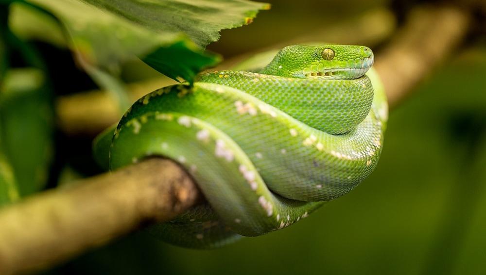 veneno-serpiente.jpg