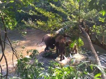 elefantesportadaok.jpg